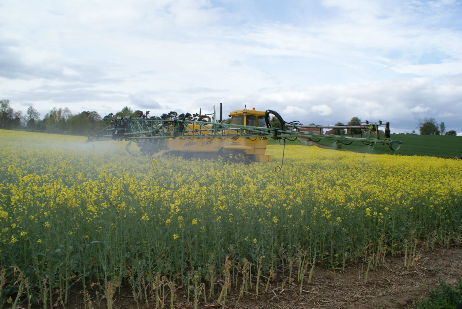 spraying insecticide over oilseed rape best practice to protect bees